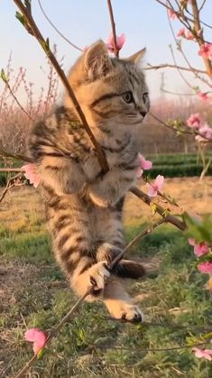 Cute Baby Cats, Cute Cats And Kittens, Cute Little Animals, Cute Funny Animals, Kittens Cutest, Baby Dogs, Funny Cats, Baby Animals Pictures, Animals And Pets