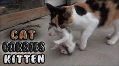 Baby Kittens for Sale Near Me: Find The Best Stores Near You Baby Kittens For Sale, Baby Cats, Buy A Kitten, Newborn Kittens, Sphynx, Pet Store, Cat Gif, Drawing Reference, Carry On