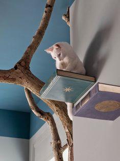 Ecco il Romeow Cat Bistrot