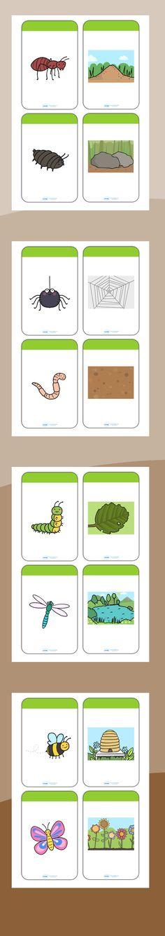 Minibeasts and their Habitats Matching Cards Preschool Science, Teaching Science, Science For Kids, Teaching Tools, Bug Activities, Matching Cards, Forest School, Bugs And Insects, Disney Scrapbook