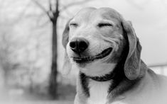Smile of a friendly dog