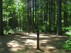 Bonnechere Provincial Park, Camping in Ontario Parks Ontario Parks, Canada, Camping, Plants, Campsite, Plant, Campers, Tent Camping, Rv Camping