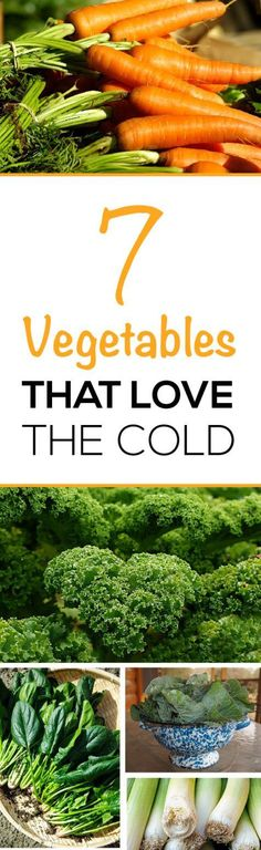 Most garden plants are warm weather lovers, wanting that full sunlight and heat to grow and produce.  However, there is a number of vegetable plants that thrive in the cold weather, making them great choices for early and late season garden plots.  The following is a list of 15 vegetables that love the