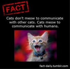 Fact about Cats