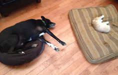 Dog Beds Helpful Techniques For Funny and Unusual Dog Beds Funny Dog Beds, Cool Dog Beds, Funny Dogs, Funny Animal Pictures, Funny Animals, Bed Back, Beautiful Cats, Dogs And Puppies, Doggies