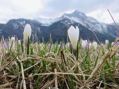 Mi perdo nella terra come nel cielo, con la testa tra le nuvole, con gli occhi tra i primi fiori che lasciano l'erba secca dell'inverno per volare in alto, oltre le montagne.  Sauris di Sopra, Friuli-Venezia Giulia