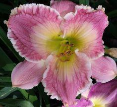 Beautiful pink seedling!