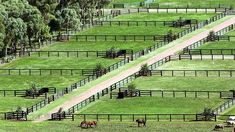 View topic - Fallin and risin Equestrian Stables, Horse Stables, Horse Barns, Horses, Dream Stables, Dream Barn, Show Cattle Barn, Horse Farm Layout, Horse Paddock