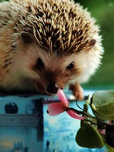 hedgehog with a flower