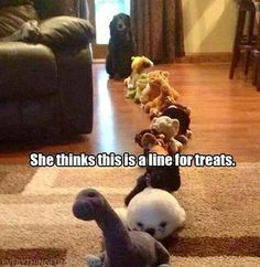 Wait your turn. Funny Animal Pictures, Best Funny Pictures, Funny Photos, Funny Images, Silly Pics, Kid Pictures, Funny Dog Memes, Funny Dogs, Cute Dogs