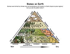 Exploring Nature Educational Resource - this site is full of beautifully watercolored illustrations - some content members only
