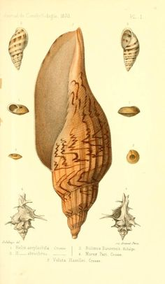 t 18 (1870) - Journal de conchyliologie. - Biodiversity Heritage Library