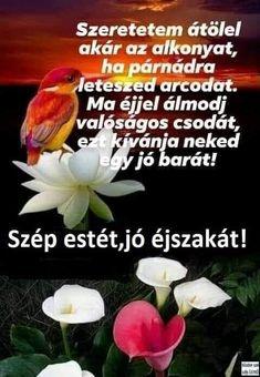 Good Night, Good Morning, Humor, Plants, Album, Flower, Nighty Night, Buen Dia, Bonjour