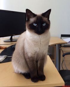 Its My Cake Day So Heres A Pic Of My Gorgeous Kitty Arya Cute cats HQ Pictures of cute cats and kittens Cute Kittens, Pretty Cats, Beautiful Cats, Crazy Cat Lady, Crazy Cats, Big Cats, Cool Cats, Baby Animals, Cute Animals