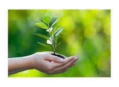 DIA DA ÁRVORE SERÁ COMEMORADO COM DISTRIBUIÇÃO DE MUDAS. http://www.passosmgonline.com/index.php/2014-01-22-23-08-21/meio-ambiente/2774-dia-da-arvore-sera-comemorado-com-distribuicao-de-mudas