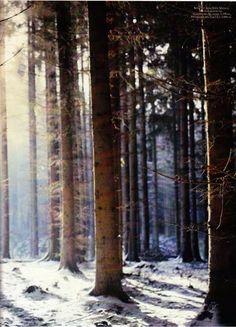 Winter forest - Denmark
