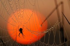 The ONLY way I want to see a spider...in an awesome photo!!