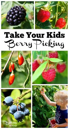 Get outside and go on a berry picking field trip! An outside activity for homeschoolers or the whole family that is also a great sensory and learning activity for toddlers through grade schoolers. Click through to find out how and where to take your kids berry picking this season.