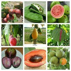 frutas y plantas exóticas