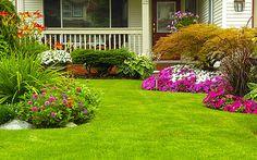 Lawn Fertilization, Aeration, Weed & Pest Control