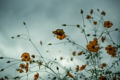 kazuhiroueda:  shinagawa, tokyo / leica M + summicron 50mm 1st  東京・品川 / ライカM + ズミクロン50mm 沈胴 Kazuhiro Ueda on Instagramblog:kazaruki.blog.fc2.com