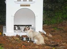 This was Gracie, one of the Loews cats at her feeding station that was built by hotel employees to keep the cats sheltered and protected. Gracie is no longer with us, having passed on, nor are these iconic cat mansions that have been taken apart by Loews to be destroyed in the trash. #outdoorcathouse #outsidecathouse #catoutsidehouse #cat #outdoor #outside #house www.catbedandtoy....