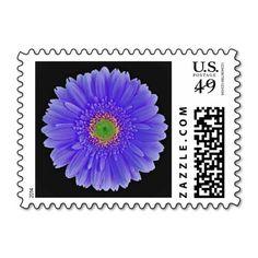 Purple, Gerbera Daisy, Postage Stamps. #purple #gerbera #daisy #gerber #stamps
