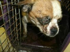 Orange City man abandons dog in crate: Said he couldn't afford $20 surrender fee