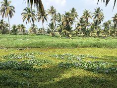 Incredible India, Kerala, Vineyard, Portrait, Nature, Plants, Travel, Outdoor, India