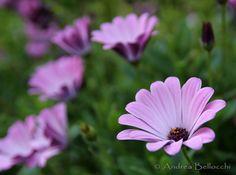 #fiori #primavera