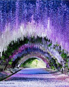 Wonderful PlacesさんはInstagramを利用しています:「Wisteria Tunnel, Kawachi Fuji Gardens - Japan ✨💜💜💜✨ Picture by ✨✨@puraten10✨✨ . #wonderful_places for a feature 💜」