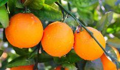 Huile essentielle d'orange amère | Santé et Beauté | Tendances