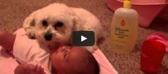 Is this the cutest video ever? Dog protects baby!