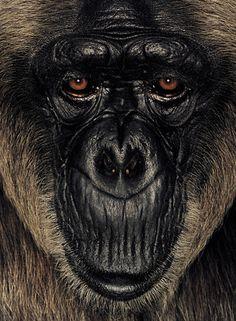 Ritratti di Scimmie
