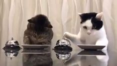 And they say you can't really train cats? This video shows two extremely cute cats ringing a bell to ask for food from their owner. OK, so the cats are really just meeting Cute Funny Animals, Cute Baby Animals, Funny Cats, Sleepy Animals, Funny Humour, Fun Funny, Cute Animal Videos, Funny Animal Pictures, Animal Pics