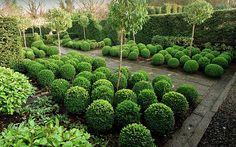 Tony Ridler's Garden
