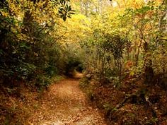 A Cherokee Trail   This is a path in the fall that the Cherokee Indians used over 2000 years ago located in Cashiers, North Carolina