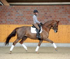 Develop the Quality of Submission in Your Horse | Dressage Today