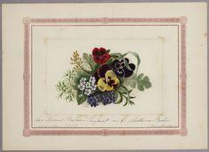 Een pagina met een tekening van #violen uit het Album Amicorum van Bosboom-Toussant. #bloemen #viool Alle foto's: https://www.flickr.com/photos/public-domain-archief-alkmaar/albums/72157659987270548