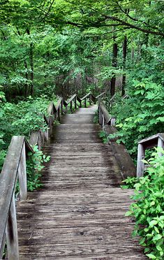 Holden Arboretum, Kirtland, Ohio. Red Oak is lucky to be neighbors with such a beautiful place! Campers often have the opportunity to go on hikes, creek stomp, and backpack through the Holden Arboretum.