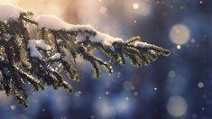 desktop-wallpaper-laptop-mac-macbook-air-mk28-snowing-tree-blue-christmas-winter-nature-mountain-wallpaper Snow Wallpaper Iphone, Winter Wallpaper Desktop, Xmas Wallpaper, Christmas Phone Wallpaper, Christmas Aesthetic Wallpaper, Winter Wallpapers, Wallpaper Ideas, Screen Wallpaper, Christmas Desktop