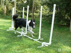Use PVC pipes to build agility weave poles for your dog! Cut pieces of PVC pipe to the lengths needed for the weave poles, pole spacers and stand feet. Assemble the PVC pipes with PVC connectors and p Agility Training For Dogs, Dog Agility, Dog Training Tips, Training Schedule, Brain Training, Potty Training, Dog Behavior, Dog Care, Animals