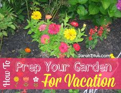 How to Prep Your Garden For Vacation | SarahTitus.com ~ Saving Money Never Goes Out of Style