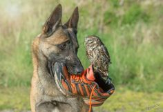 Ingo ,.... Yo que tú devolvía ese zapato !!