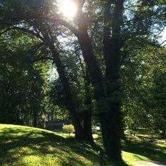 Die letzten Sonnenstrahlen im herbstlichen Mirabellgarten. #TC