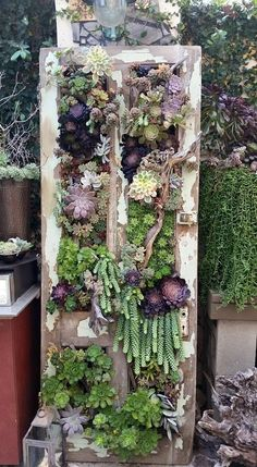 Succulents in a door frame from the Succulent Cafe. Photo by Paula Deubig - Succulents in a door frame from the Succulent Cafe. Photo by Paula Deubig - Vertical Succulent Gardens, Succulent Wall Art, Succulent Gardening, Succulent Terrarium, Plant Wall, Plant Decor, Container Gardening, Succulent Display, Terrariums