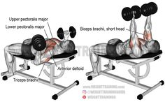 A compound exercise. Synergistic muscles: Lower Pectoralis Major Anterior Deltoid and Triceps Brachii. Dynamic stabilizer: Biceps Brachii (short head only). Best Chest Workout, Chest Workouts, Fit Board Workouts, Bench Press Muscles Worked, Back Exercises, Chest Exercises, Training Exercises, Compound Exercises, Dumbbell Workout