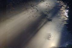 Солнечный Луч, Туман, Осенью, Природы, Солнечный Свет
