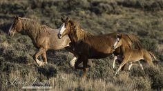 Resultado de imagen de horse family