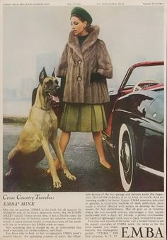 1962 Great Dane photo Emba Mink fur coat Possible Photo redo with Buster